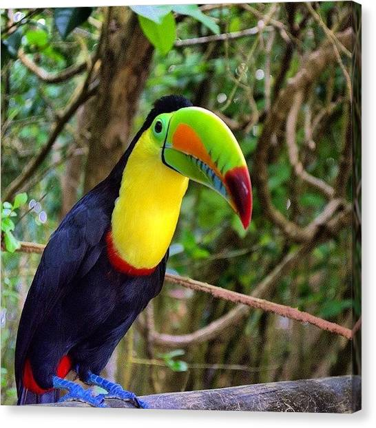 Jungles Canvas Print - Bird by Katalina Fuentes