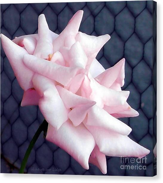 Una Rosa D'autunno Canvas Print