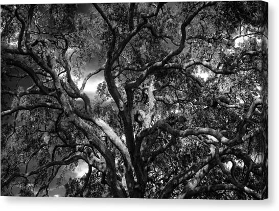 Under A Tree In Black And White Canvas Print