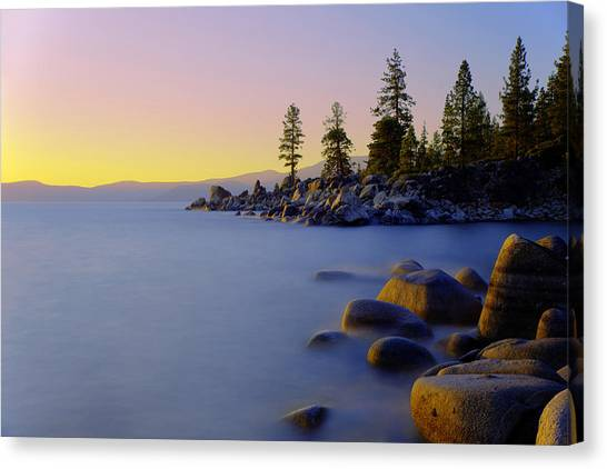 Fir Trees Canvas Print - Under Clear Skies by Chad Dutson