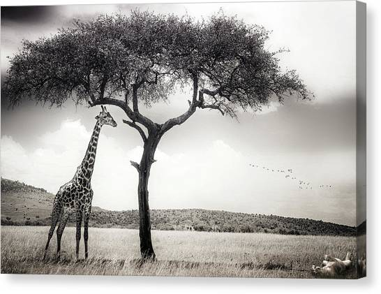Neck Canvas Print - Under The African Sun by Piet Flour