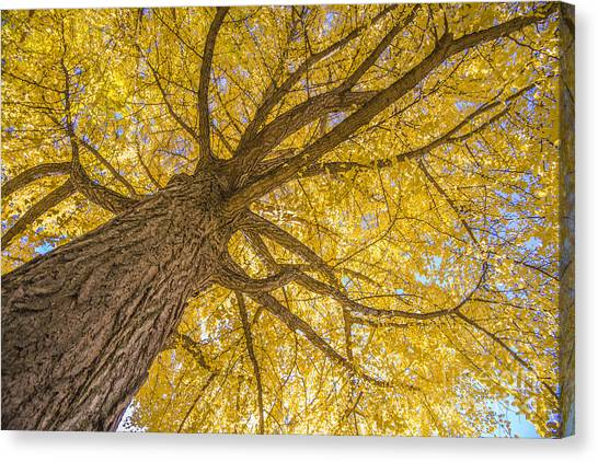 Under The Autumn Tree Canvas Print