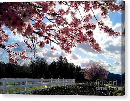 Under The Cherry Blossom Canvas Print