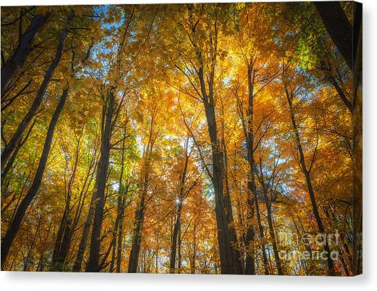 Under The Golden Canopy Canvas Print