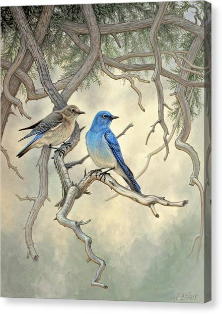 Yellowstone Canvas Print - Under The Old Juniper-mountain Bluebirds by Paul Krapf