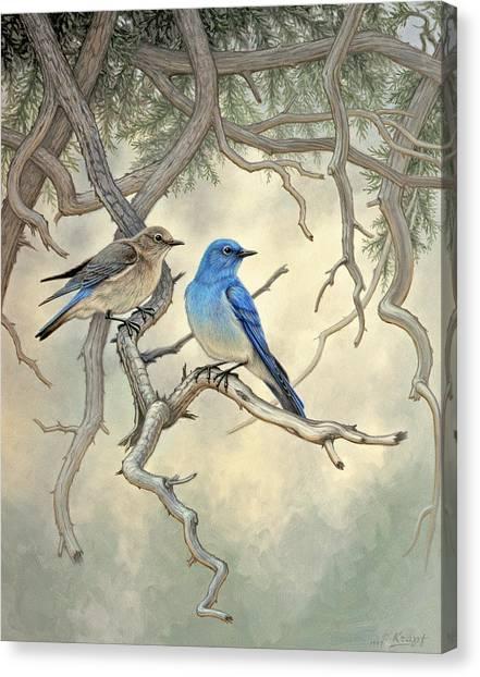 Bluebirds Canvas Print - Under The Old Juniper-mountain Bluebirds by Paul Krapf