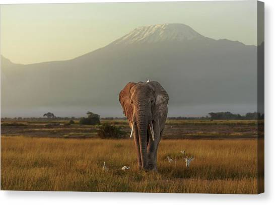 Large Birds Canvas Print - Under The Roof Of Africa by Massimo Mei