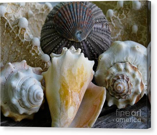 Conch Shells Canvas Print - Under The Sea by Colleen Kammerer