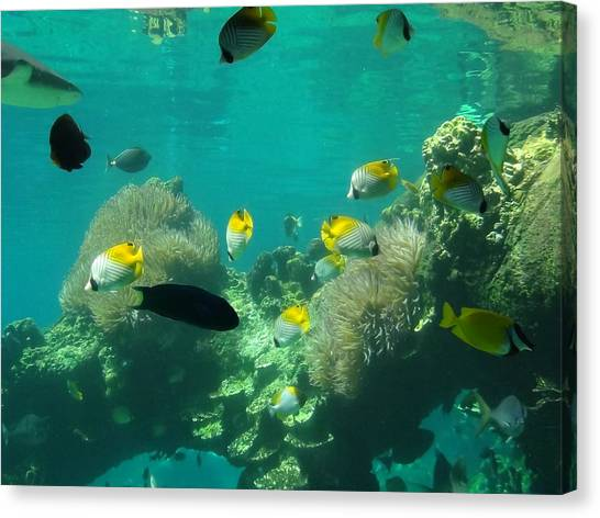 Fish Tanks Canvas Print - Under The Sea by Jaime Pritchard