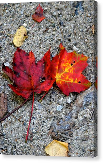 Underfoot Canvas Print