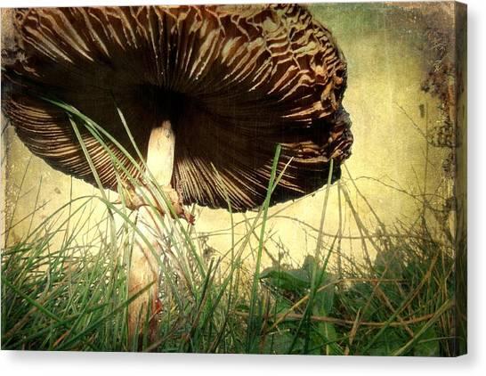 Underneath The Mushroom Canvas Print