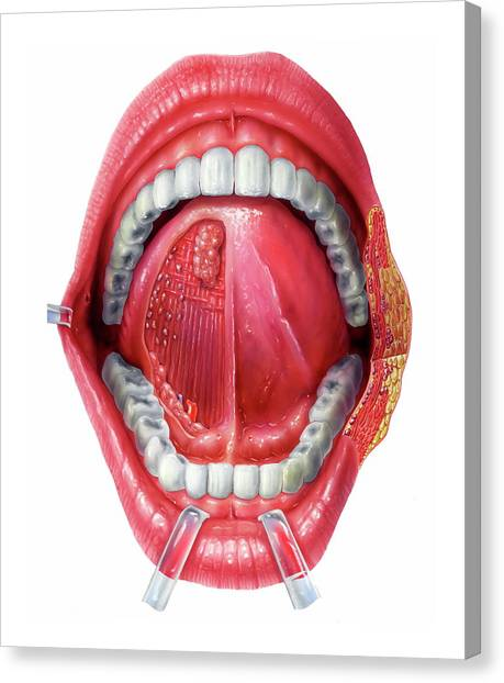 Underside Of The Tongue Canvas Print by Bo Veisland/science Photo Library