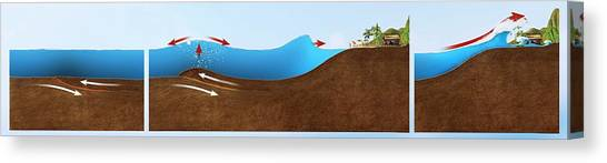 Tsunamis Canvas Print - Underwater Earthquake And Tsunami by Claus Lunau/science Photo Library