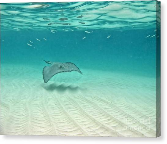 Underwater Flight Canvas Print