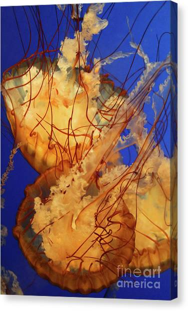 Underwater Friends - Jelly Fish By Diana Sainz Canvas Print