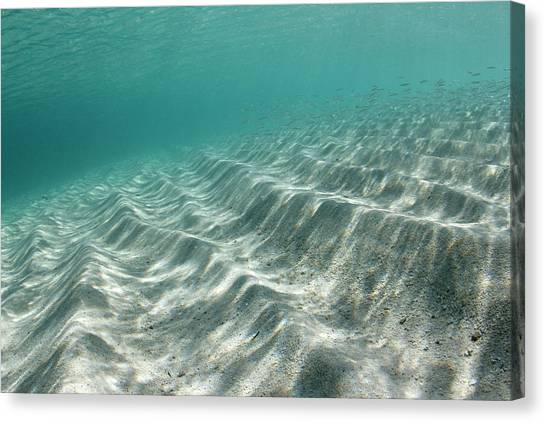 Bahamian Canvas Print - Underwater Sand Ripples by Michael Szoenyi