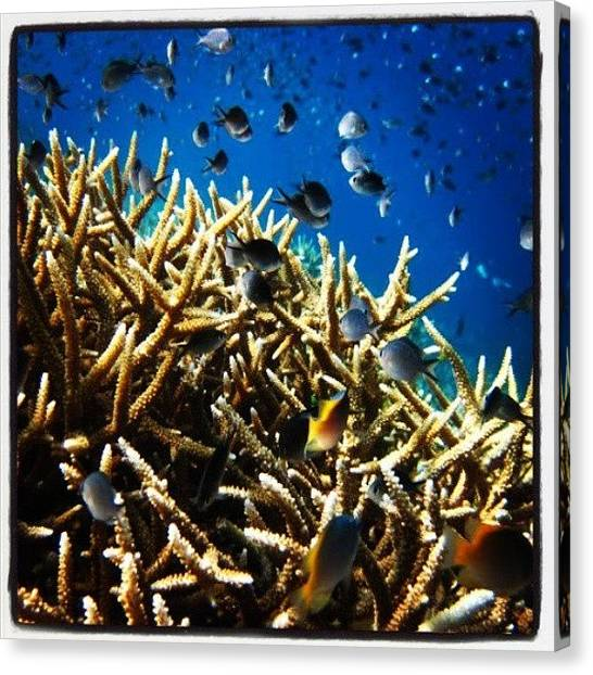 Scuba Diving Canvas Print - #underwater #view #diving #snorkeling by Fajar Triwahyudi