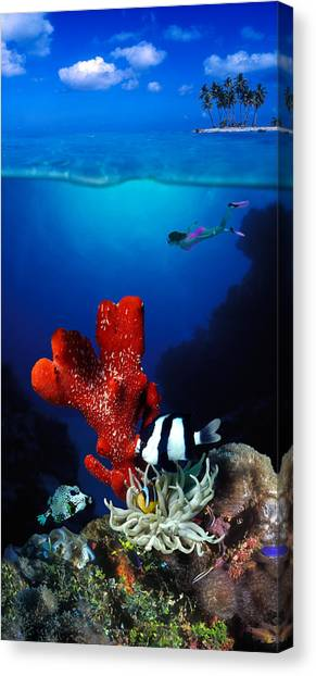 Flipper Canvas Print - Underwater View Of Sea Anemone by Panoramic Images
