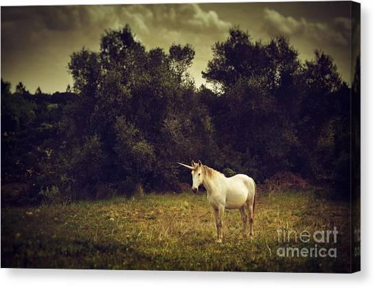 Unicorns Canvas Print - Unicorn by Carlos Caetano
