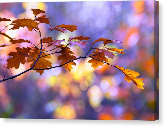 Nederland Canvas Print - United Colours Of Autumn II by Roeselien Raimond