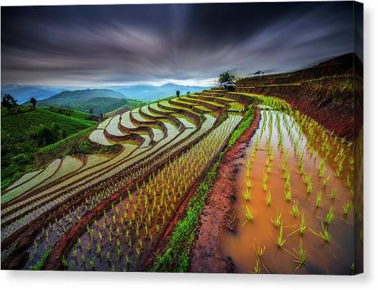 Farm Landscape Canvas Print - Unseen Rice Field by