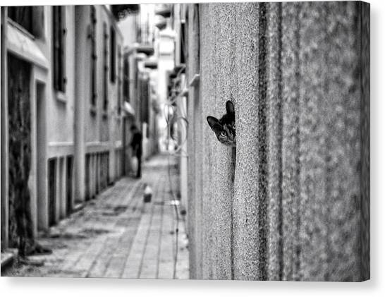 Street Canvas Print - Untitled by Ali Ayer