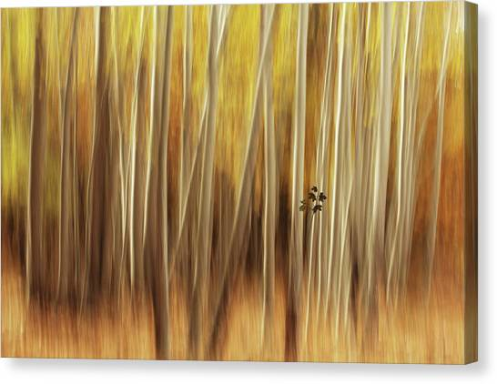 Untitled Canvas Print by Amir Hossein Shojaii