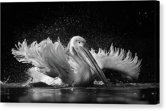 Pelicans Canvas Print - Untitled by C.s. Tjandra