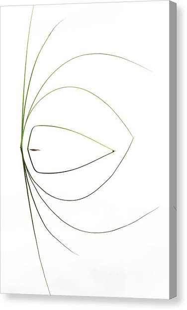 Grass Canvas Print - Untitled by Dirk Heckmann