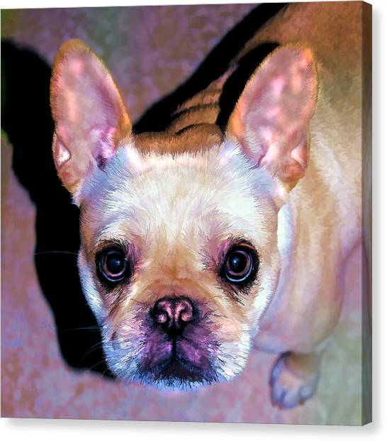 French Bull Dogs Canvas Print - You Had Me At Hello - Too by Donna Proctor
