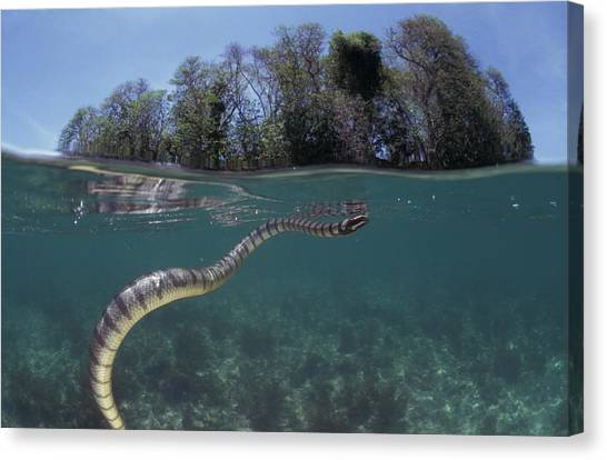 Coral Snakes Canvas Print - Untitled by Jurgen Freund