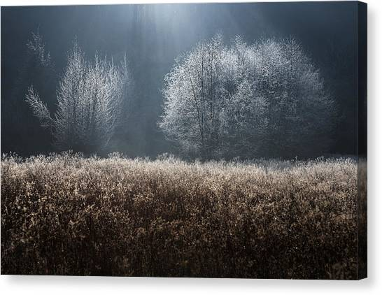 Bush Canvas Print - Untitled by Kristjan Rems