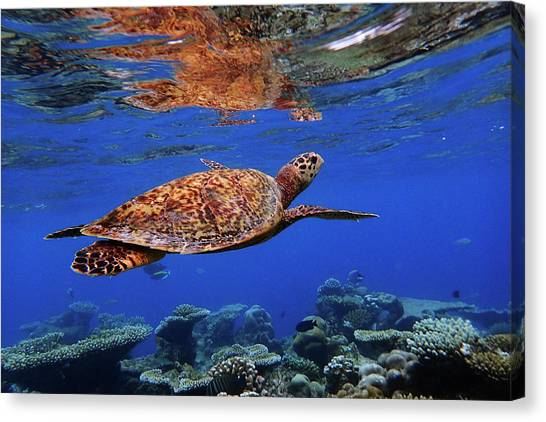 Coral Reefs Canvas Print - Untitled by Martina Dimunov?