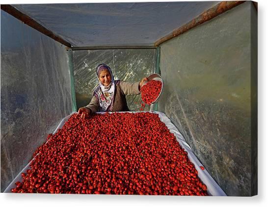 Tomato Canvas Print - Untitled by Mustafa Zengin