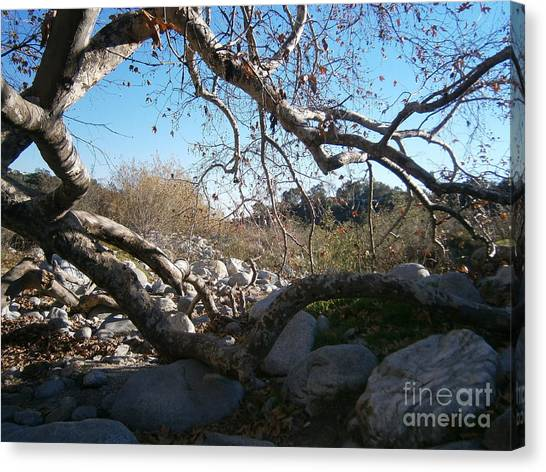 Untitled Photograph 2 Canvas Print by Drew Shourd