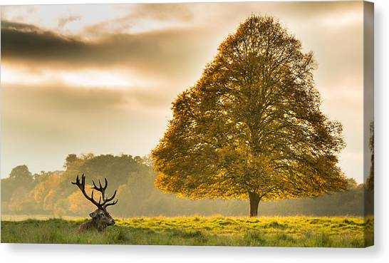 Stag Canvas Print - Untitled by Tudor Amot