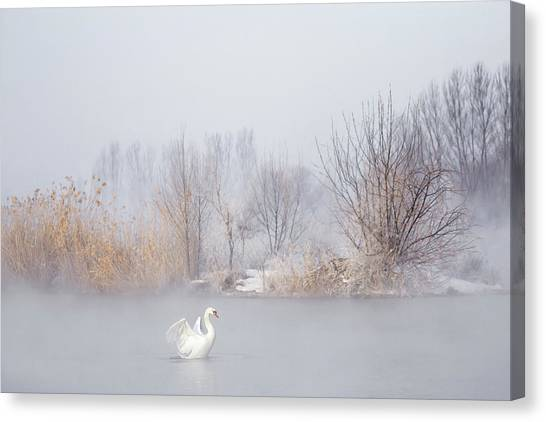 Swan Canvas Print - Untitled by Uu