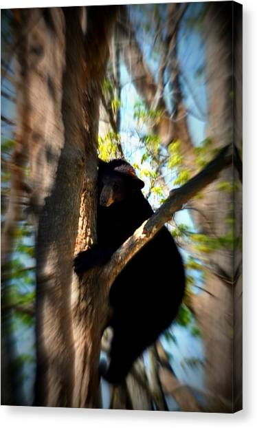 Up A Tree Canvas Print by Valarie Davis