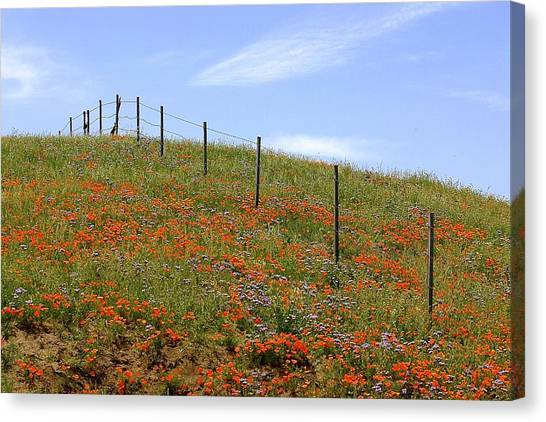 Up The Poppy Hill Canvas Print