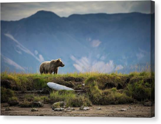 Upon The Bluff Canvas Print by Chase Dekker Wild-life Images