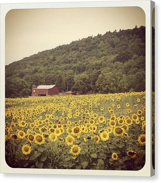 Barns Canvas Print - Upstate by Mike Maher