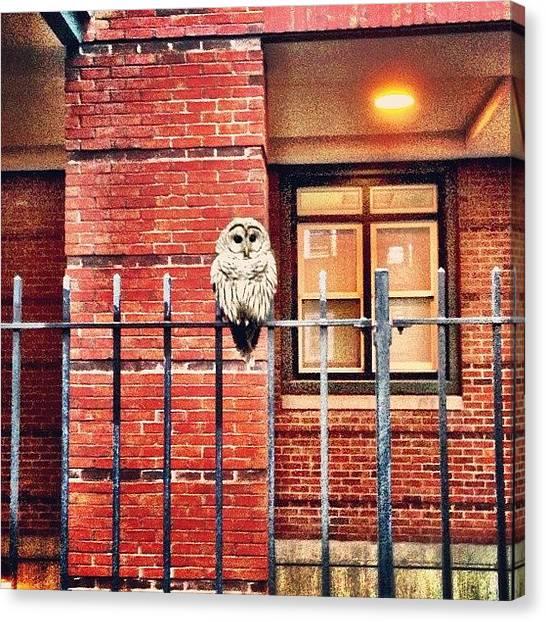 Owls Canvas Print - Urban Owl (aka Barred Owl) by Ryan Laperle