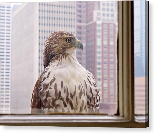 Decor Canvas Print - Urban Red-tailed Hawk by Rona Black