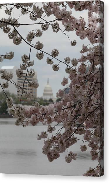 Us Capitol - Cherry Blossoms - Washington Dc - 01132 Canvas Print by DC Photographer