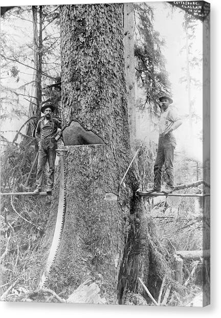 Saws Canvas Print - Us Forestry by Library Of Congress