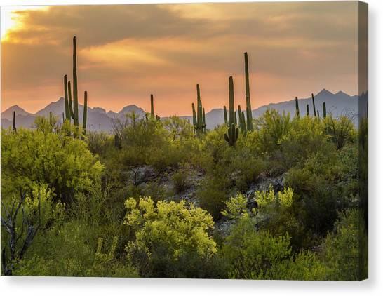 Desert Sunsets Canvas Print - Usa, Arizona, Saguaro National Park by Jaynes Gallery