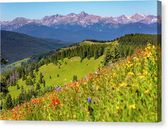 Treeline Canvas Print - Usa, Colorado, Shrine Pass, Vail by Jaynes Gallery