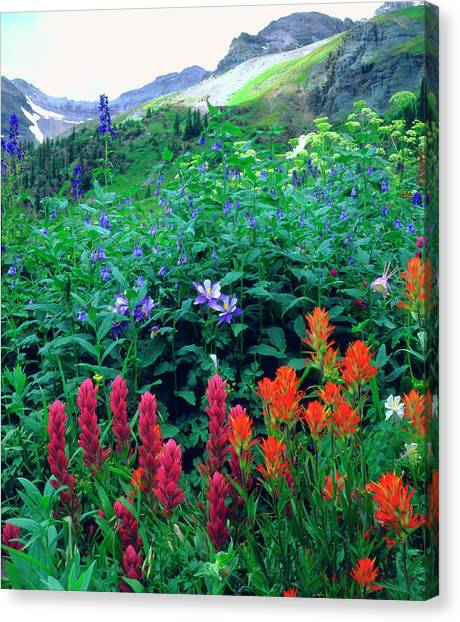 Usa, Colorado, Wildflowers In Yankee Canvas Print by Jaynes Gallery