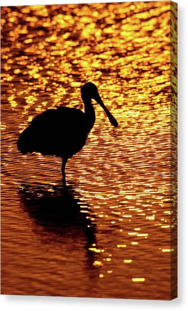 Spoonbills Canvas Print - Usa, Florida, Vierra Wetlands by Jaynes Gallery