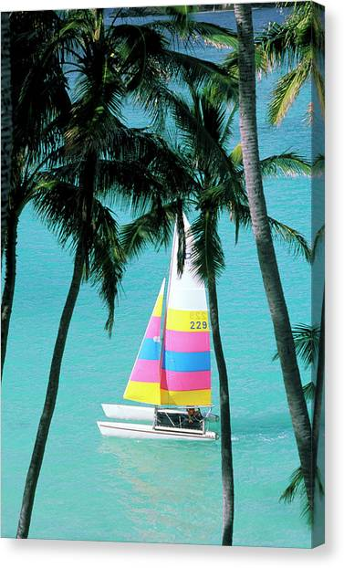 Catamarans Canvas Print - Usa, Hawaii Catamaran And Palm Trees by Sunstar
